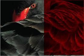 blackredswan